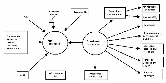 Процессы ассимиляции и диссимиляции в