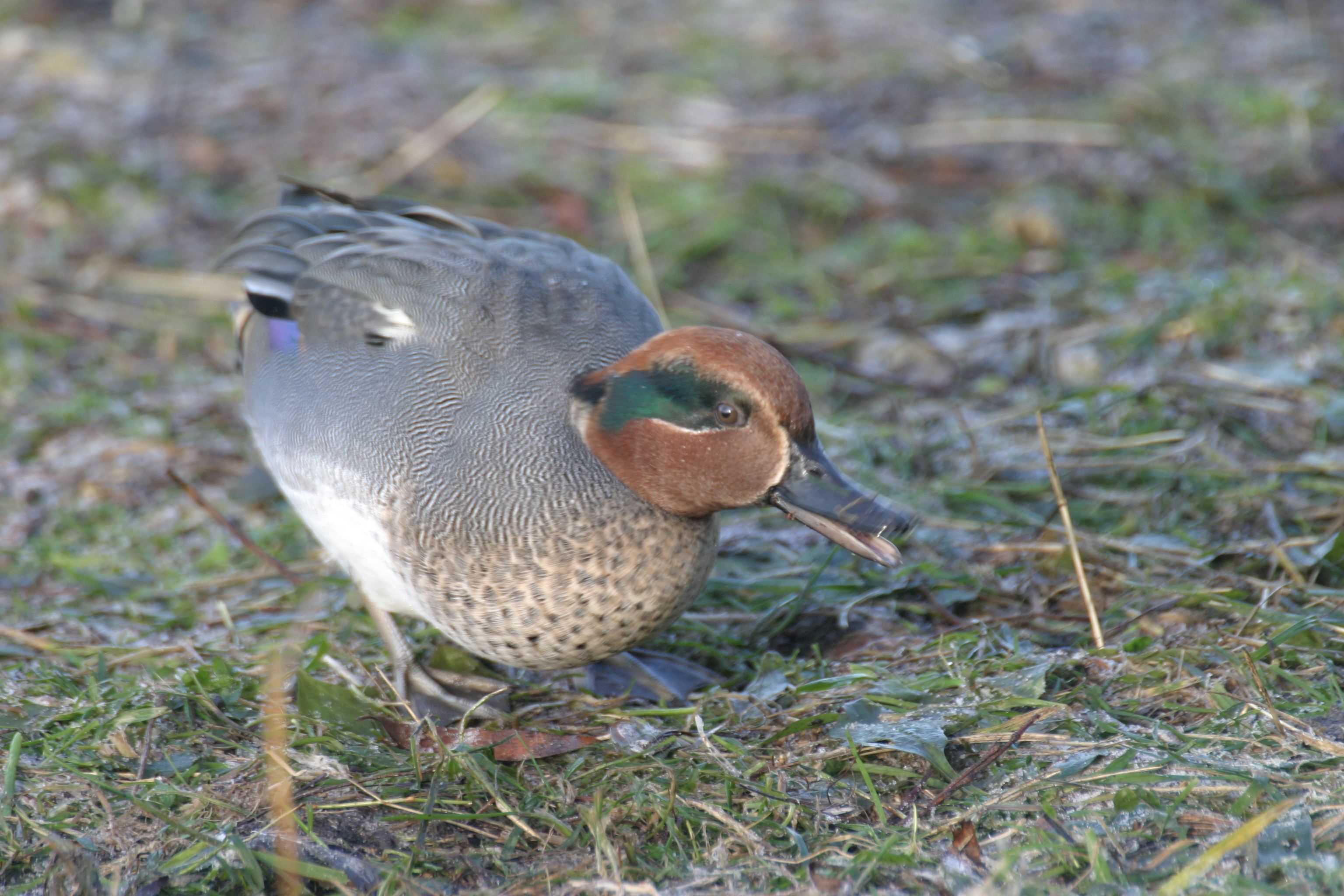 Послушать голоса птиц 9 фотография